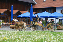 Horse & Carriage at the Urthalerhof